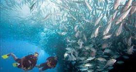 2. Cala Vidre (Ruta Submarina)
