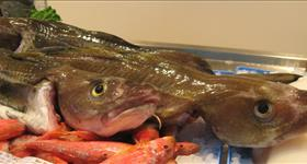 Jornades gastronòmiques del peix de llotja i de  l'Arrossejat