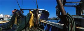 Arts Majors, pesca d'arrossegament - Pesca Turisme