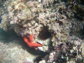 Sortida amb bussejadors - Centre de Submarinisme Subkro