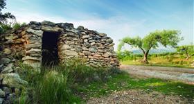 1. Márgenes y estructuras con piedra seca (Ruta de los olivos)