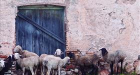 3. Vías y abrevadores ganaderos (Ruta de los olivos)